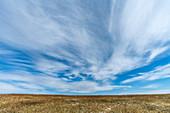 Feld unter Wolke