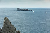 France, Finistere, Brest, Fetes maritimes internationales de Brest 2016 (International maritime feast Brest 2016), large gathering of sailing and yachting and of sailors and seafarers, sailboats during the Grande Traversee (the big crossing) between Brest and Douarnenez, the Tas de Pois