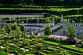 France, Indre et Loire, Loire Valley listed as World Heritage by UNESCO, gardens of the castle of Villandry (property of Angelique and Henri Carvalho)