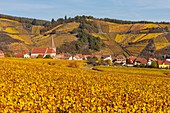 France, Haut-Rhin, Alsace Wine Route, Niedermorschwihr, the village surrounded by the vineyard and its bell tower church