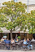 France, Gironde, Bordeaux, area listed as World Heritage by UNESCO, Place Camille Jullian, cafe terrace