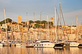 France, Alpes-Maritimes, Cannes, the old port and its yachts from the Albert Edouard jetty, in the background the Suquet with the bell tower of the Church Notre-Dame-de-l'Espérance and the tower of Suquet