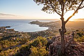 France, Var, corniche de l'Estérel, Saint Raphaël's common Agay, massif of Estérel, the bay of Agay with in background the Cap du Dramont view since the viewpoint indicator of the rastel