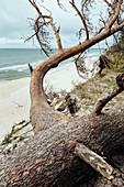 Beach in Widowo Nature Reserve, Pomerania, Baltic Sea, Poland
