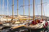 France, Alpes Maritimes, Cannes, the old port and its classic yachts from quai Saint-Pierre