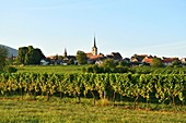 Frankreich, Bas-Rhin, Elsässische Weinstraße, Mittelbergheim