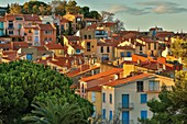 France, Pyrenees Orientales, Collioure, view of the city skyline