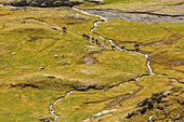 France, Hautes Pyrenees, listed at Great Tourist Sites in Midi Pyrenees, Pyrenees National Park, listed as World Heritage by UNESCO, Gavarnie, riders walking in mountain pastures