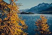 Inseln im Silsersee bei Sonnenaufgang, Oberengadin, Sankt Moritz im Engadin, Schweiz, Europa