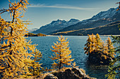 Inseln im Silsersee bei Sonnenaufgang, Oberengadin, Sankt Moritz im Engadin, Schweiz, Europa\n