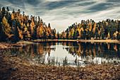 Herbstlicher Wald am Lej Nair, im Oberengadin, Engadin, Schweiz