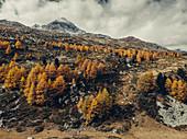 Autumn forest on the Morteratsch Glacier, Upper Engadine, Engadine, Switzerland, Europe