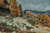 Herbstlicher Wald am Lago Bianco, Oberengadin, Engadin, Schweiz, Europa
