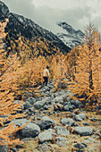 Man hikes in the autumn forest on the Morteratsch Glacier, Upper Engadine, Engadine, Switzerland, Europe