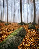 Morning fog in the Felsenmeer in autumn, Lautertal, Odenwald, Hessen, Germany