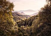 View from Monte Spalavera, Trarego, Viggiona, Lake Maggiore, Piedmont, Italy