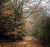 Autumn in the forest, autumnal leaves, Bavaria, Germany