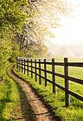 Morning sun on a pasture field, Odenwald, Hesse, Germany