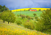 Rape field in an agricultural environment in a stormy mood, Magden, Canton of Aargau, Switzerland