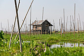 Drive through the waters of Inle Lake with house on stilts, Heho, Myanmar
