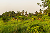Nature view with palm trees and grass on Koh Kret, Bangkok, Thailand