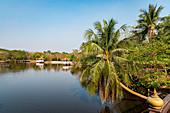 Palme über Gewässer im botanischen Garten des Ortsteil Prapadaeng, Bangkok, Thailand