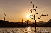 Tote Bäume im Wasser bei Bootsfahrt auf dem Ratchaprapha See im Abendlicht, Khao Sok Nationalpark, Khao Sok, Thailand