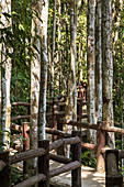 Weg durch Dschungel zum Emerald Pool, Nationalpark Sa Morakot, Krabi Region, Thailand