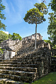Overgrown stairs of Mayan pyramid on Calakmul temple grounds, Yucatan Peninsula, Mexico