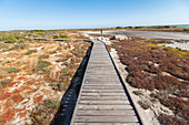 Footbridge over flora of the West Coast National Park, Western Cape. South Africa