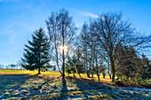 Wintry trees near Ransen, Hunsrück, Rhineland-Palatinate, Germany