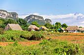 """Landschaft und ländliches Leben auf Wanderweg im Vinales Tal (""""Valle de Vinales""""), Pinar del Rio Provinz, Kuba"""