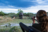 A teenage girl using a camera taking pictures of a mature elephant with tusks approaching
