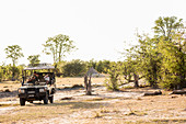 A jeep with passengers observing a pair of lions resting in a game reserve