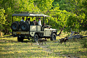 Passengers in a safari jeep observing a pack of wild dogs in woodland.