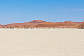 View over white landscape and dunes of the Deadvlei (white salt-clay pan), Sossusvlei, Sesriem, Namibia