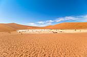 Blick über weite Landschaft des Deadvlei (weiße Salz-Ton-Pfanne), Sossusvlei, Sesriem, Namibia