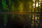 Idyllic forest path with a reflection in a puddle in the Aubinger Lohe. Aubinger Lohe, Munich, west of Munich, Upper Bavaria, Bavaria, Germany, Europe,
