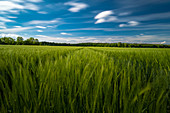 Young cornfield in front of a forest with clouds sky in long exposure. Upper Bavaria, Bavaria, Germany, Europe,