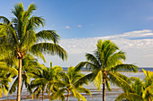 View of palm trees and Pacific Ocean on Yanuca Island, Fiji