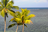 Coral reef in the Pacific Ocean and palm trees on Yanuca Island, Fiji