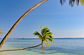 Palm trees right on the beautiful tropical beach, with a view of the Pacific, Fiji Islands