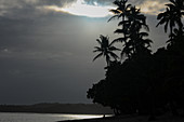 View of palm trees and the Pacific before the tropical rain with dramatic light, Savusavu, Fiji
