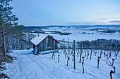 Die Weinlage Vogelsang bei Markt Einersheim im Winter, Possenheim, Kitzingen, Unterfranken, Franken, Bayern, Deutschland, Europa