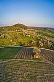View of the Vogelsang wine location at Markt Einersheim, Possenheim, Kitzingen, Lower Franconia, Franconia, Bavaria, Germany, Europe