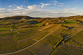 Weinberge bei Reusch im Weinparadies Franken, Neustadt an der Aisch, Mittelfranken, Franken, Bayern, Deutschland, Europa