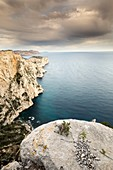 France, Bouches-du-Rhône, National park of Calanques, Marseille, 9th district, creek of Devenson and cliff of the Aiguille of Eissadon