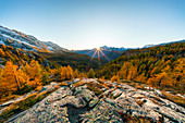 Red larches at sunset with Mount Disgrazia in the background,  Malenco Valley,  Valtellina, Sondrio, Lombardy, Italy