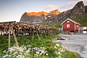 Dried fish and typical fishermen house during midnight sun, Reine, Nordland county, Lofoten Islands, Northern Norway, Europe