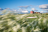 The wind moves the flowers in front of a typical fishing houses, Eggum, Unstad, Vestvagøy, Lofoten Islands, Norway, Europe